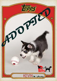 Topps Card - Kevin.jpg
