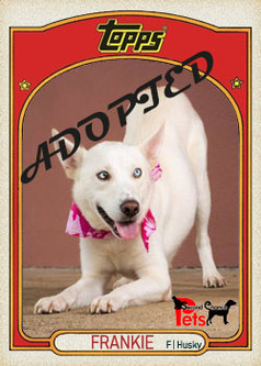 Topps Card - Frankie.jpg