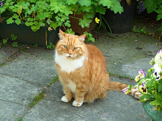 Tig in the garden