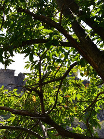 matra chateau arbre [800x600].jpg