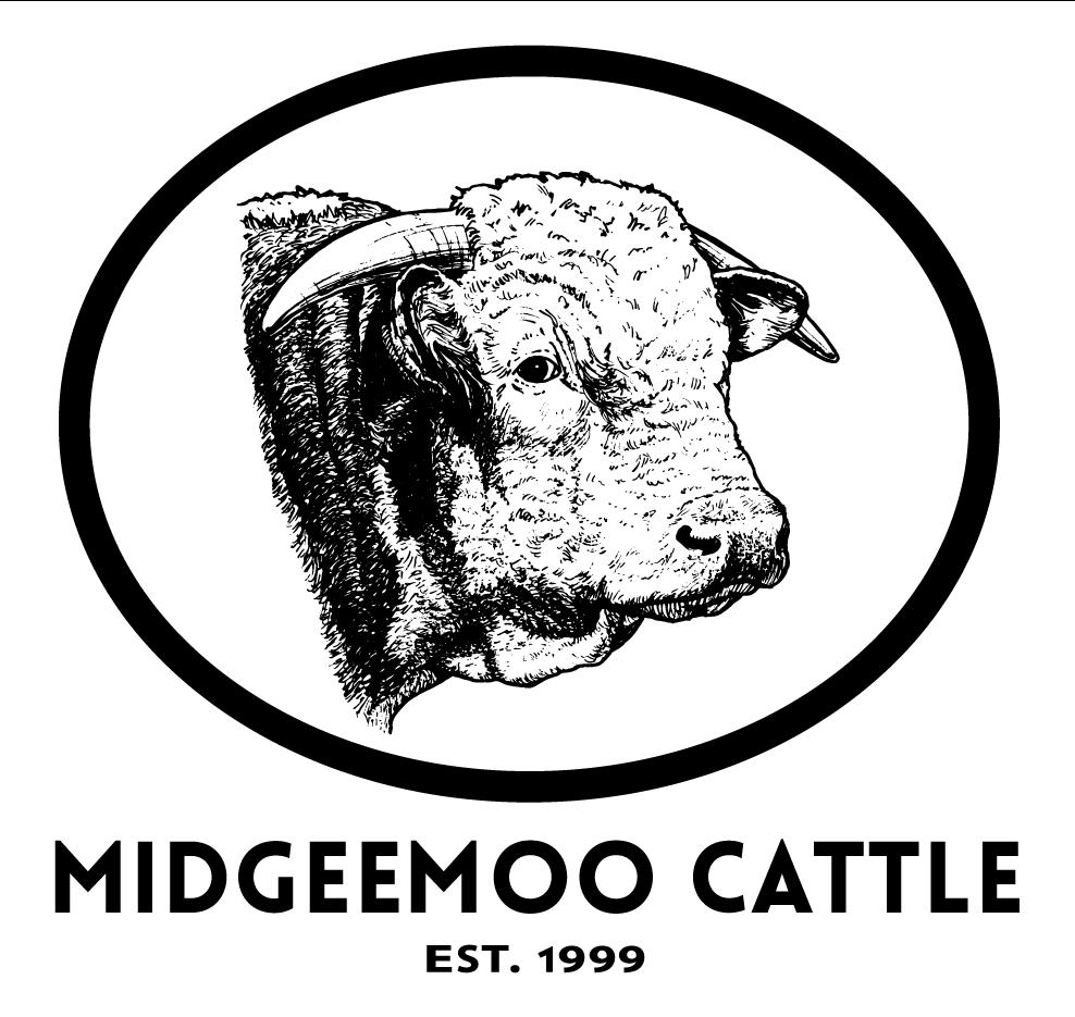 Midgeemoo Cattle - white square - 065799