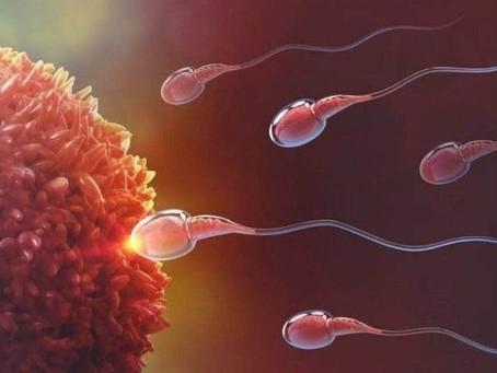O que é inseminação artificial? Veja o que é e como funciona