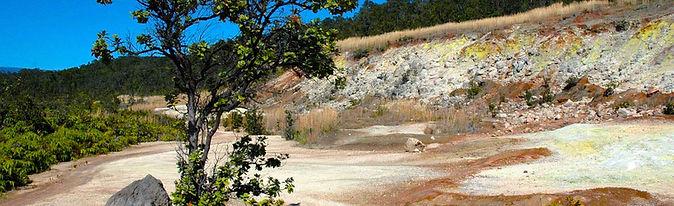 Ohia Tree At Sulfur Banks