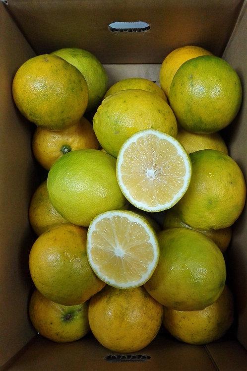 【希少国産】食べるレモン 3キロ