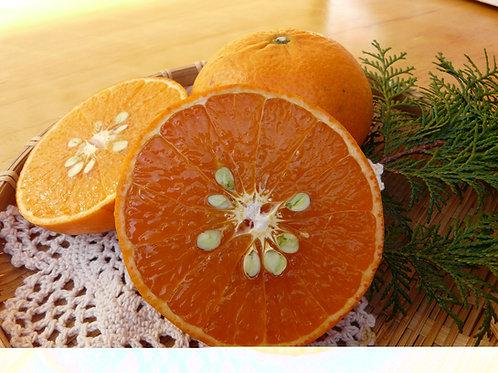 【珍しい柑橘】3キロお徳用  麗紅(れいこう)