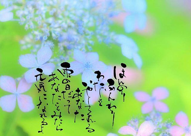 【うみさん_umi_non_photograph の紫陽花pic】_*_*_ほん