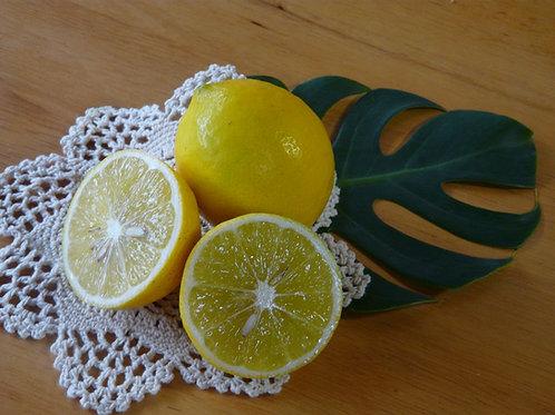 【国産】レモン 5キロ