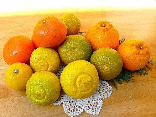期間限定【よくばり柑橘】3キロお徳用  詰め合わせ