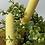 Thumbnail: Honeycomb Beeswax Candle