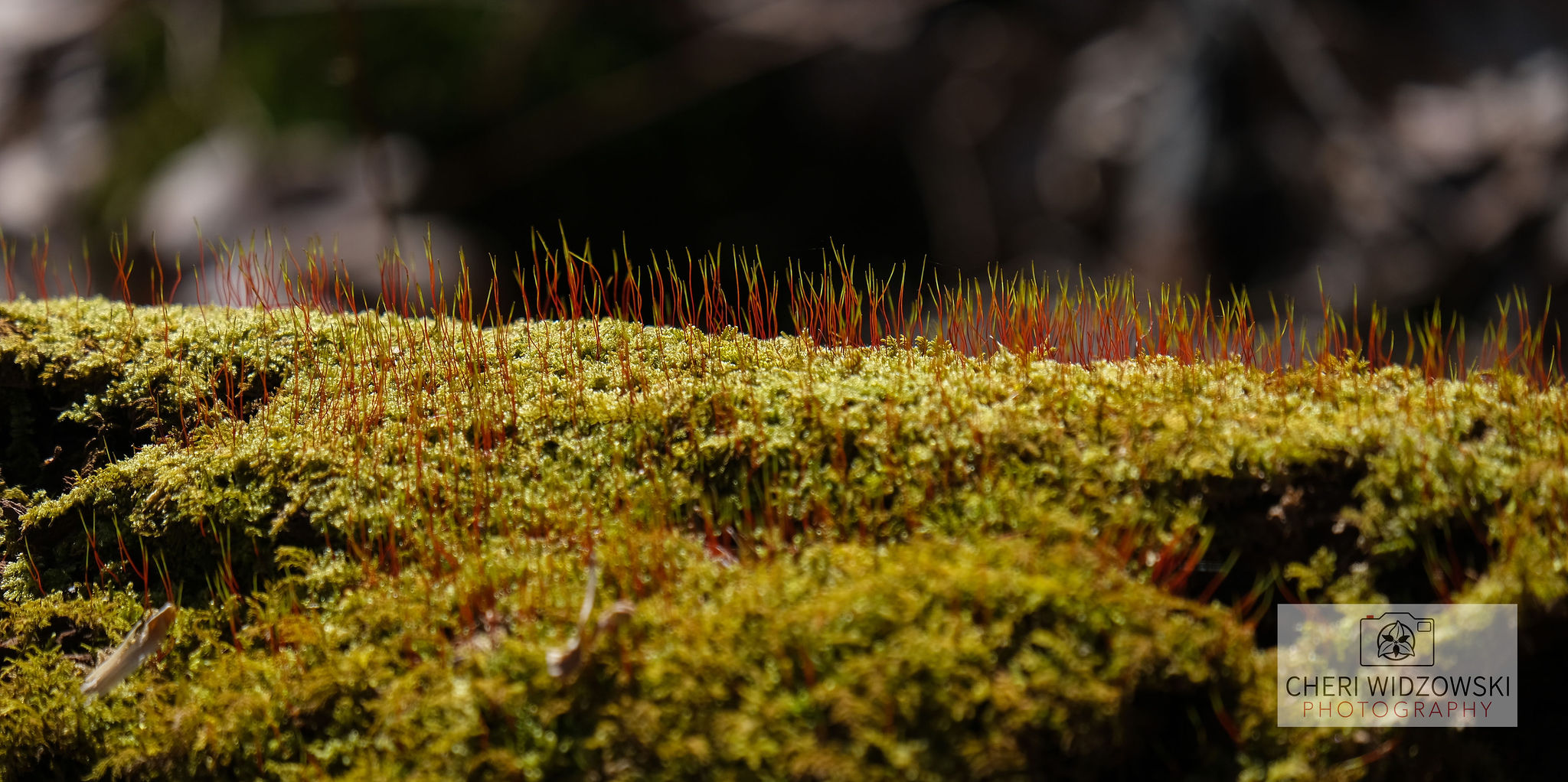 2020_03_16_WhitesWoods_mosses_8