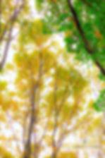 2017_10_21_WhitesWoods_nature_55.jpg