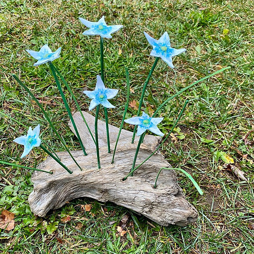 star flowers on drift wood