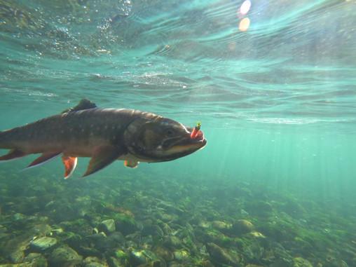 Рыбалка на Камчатке!