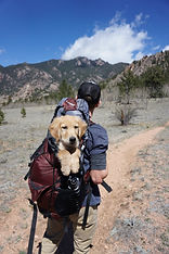 Dog in Backpack.jpg