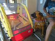 Duchess with her new transport..jpg