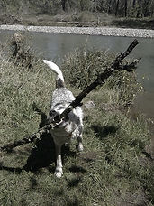 Luck with his stick May 2019.jpg