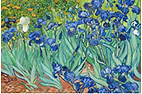 Van Gogh Irises.png