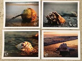 Notecards Toes in the Sand.jpg