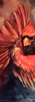 """cardinal  oil on canvas 24x24"""""""