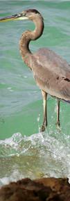 heron race II