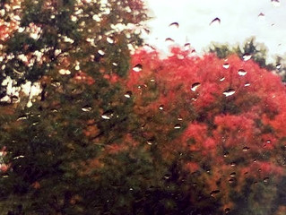 Beauty or Rain?