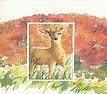 Deer - ReDisc.jpg