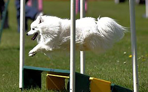 Guide to Agility for Dogs
