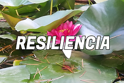 RESILIENCIA.png