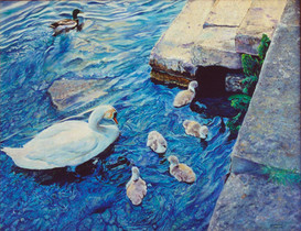 Cotswald Swans