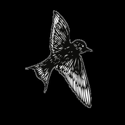 OiseauxEnVol 2.png