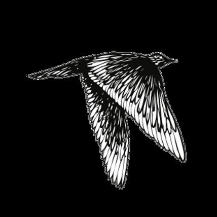 OiseauxEnVol 4.png