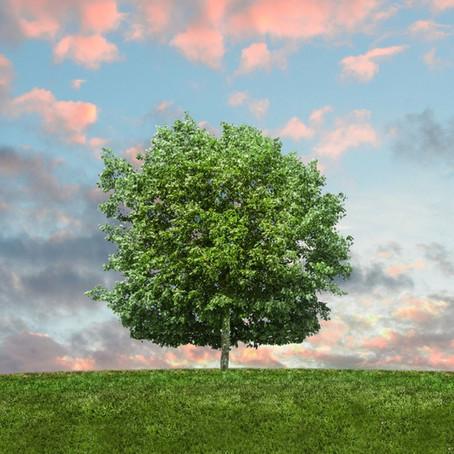3 Environmental Factors that Impact a Person's Health