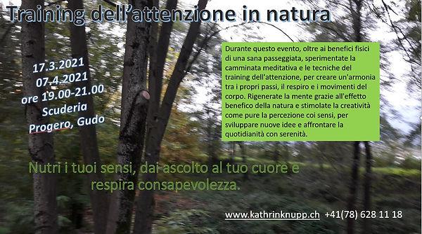Training attenzione in natura.JPG