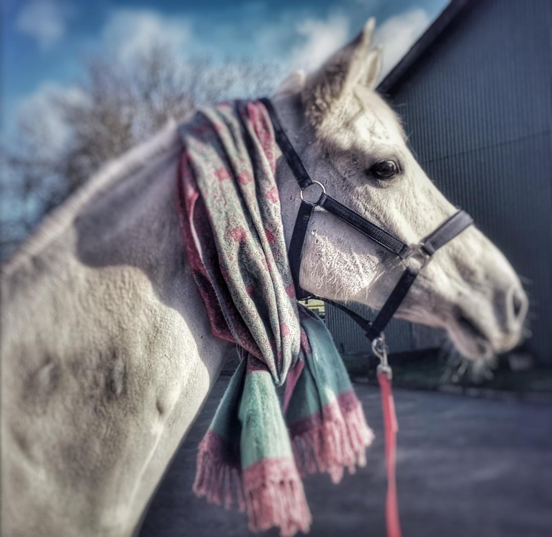 Pferd_02