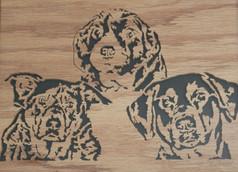 Canine Trio