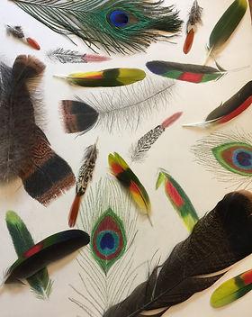 masseSue_feathers.JPG