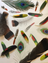 Feathers Fly
