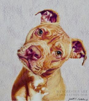 Toby Wrinkles The Wonder Dog