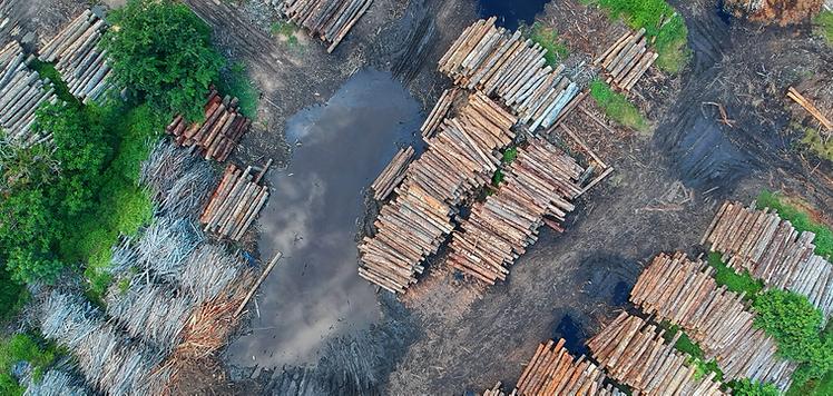 Deforestation 2.png