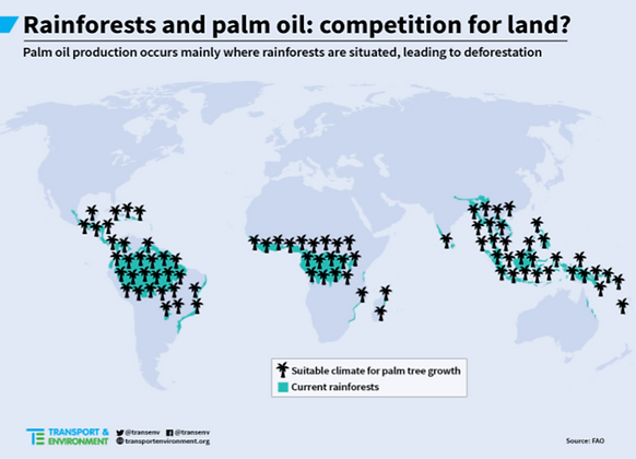 Rainforest and palm oil.png