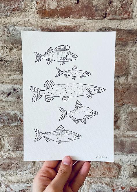 FISH / drawing