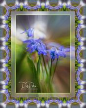Spring Framed