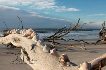 Seashells by the sea shore