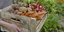 Gemüsekiste_UVP_klein2