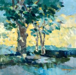Oak Oil on Canvas 24 x 24