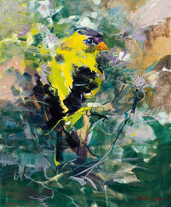 Goldfinch Oil on Canvas 24 x 20 Sold