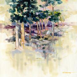 Loblolly Pines