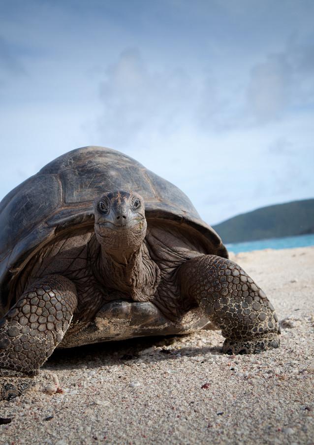 necker island tortoise on beach