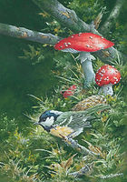 coal tit and fly agarick small.jpg