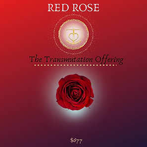 Copy of RED ROSE.png